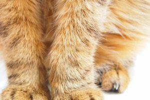 猫のしつけに必須のおすすめ商品グッズ5選