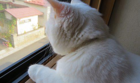 猫の特徴と性格は?飼い方のコツを教えて!