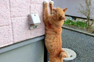 もう大丈夫!猫に行ってはいけない場所をしつける3つのポイント