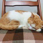 まだ寝てたいのに、、猫の早起きで困る場合のしつけ対策と原因