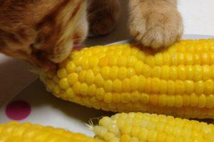 知ってる?猫が甘噛みする理由と原因