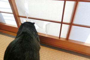 アパートで猫を飼うときに注意するべき3つのポイント