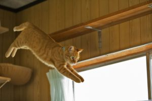猫の留守番におすすめ!一人でも遊べるおもちゃベスト3
