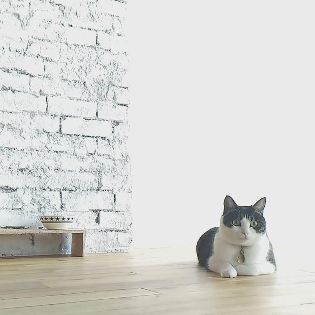 本当に猫を飼うのに知っておくべき5つの覚悟