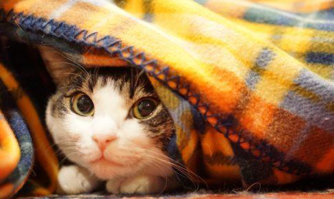 猫がマーキング習性でおしっこをする原因と対策