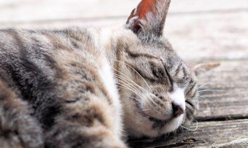 【最新版】猫の名前ランキングベスト7