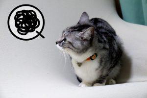 飼い猫がお水を飲んでくれないときの原因と対策