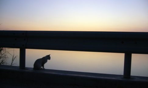 はじめて飼い猫を迎えるために最低限準備する5つのこと