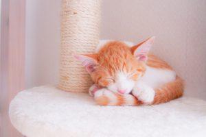 発情期の猫はどうなるの?その行動としつけを教えます