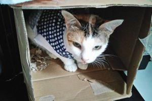猫が留守番で感じるストレスの原因と対策