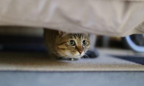 暴れる猫を押さえつけてはいけない理由を知っていますか?