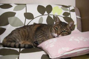 猫のしつけに褒めるは重要!上手な褒め方3つの方法