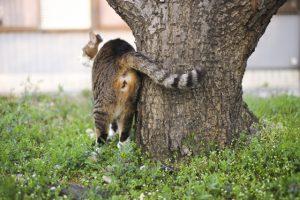 ウチの猫が便秘に。食事で出来る便秘対策
