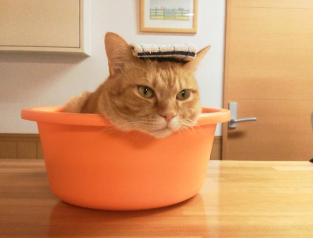 嫌いニャー!猫をお風呂に上手に入れる3つのポイント