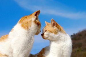 猫の多頭飼いで喧嘩する理由とその対策