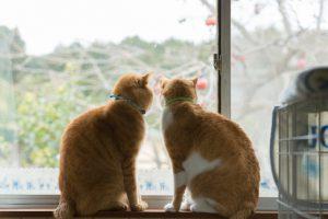猫のしつけスプレーは効果があるの?その実態とおすすめ商品