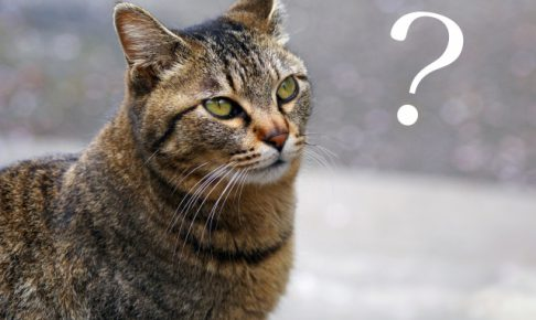 二匹目の猫を飼おうと思った時に考えないといけないこと