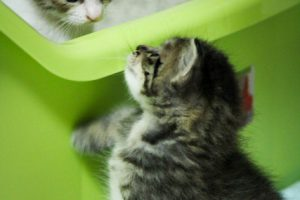 猫のしつけに罰を与えることが逆効果である3つの理由