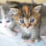 猫が網戸を破かないための3つのしつけ方法