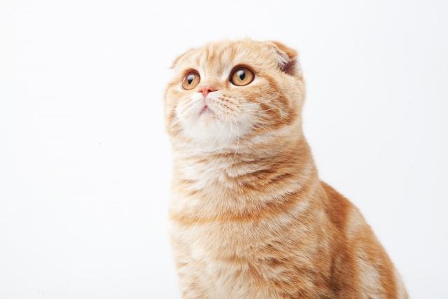 猫のしつけ教室特集!東京近郊にあるしつけ教室3選