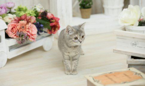 一度は読んでほしい!3つのおすすめ猫のしつけ本