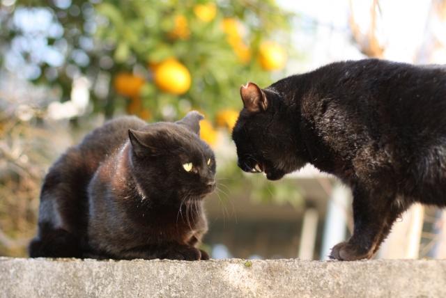 知ってる?猫の種類と性格の違い