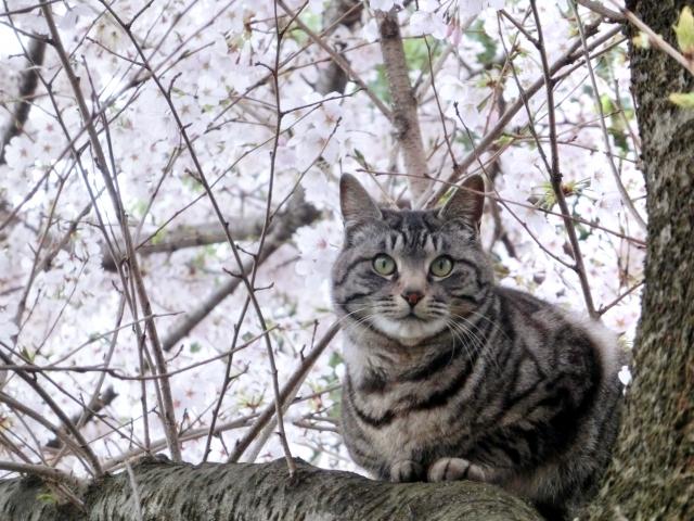 ご飯は上げてるのに、、猫がつまみ食いする理由としつけ対策