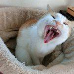 あなたは知ってた?猫がコードを噛んでしまう理由と対策