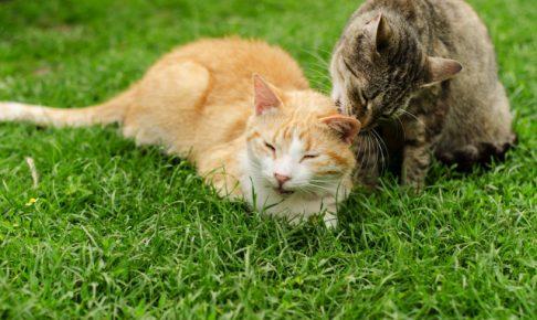 毛玉が上手く吐けない猫のためのおすすめ毛玉ケアフード