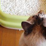準備できてる?しつけの前に用意すべき猫のトイレグッズ3選