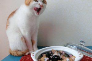 猫に一日どのくらいのキャットフードを与えればいいの?