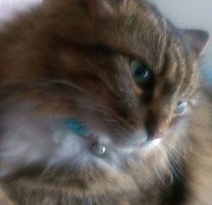 猫に自分の名前を覚えさせる3つのコツを教えます!