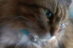 猫の人見知りは治るの?早めに取り組みたいしつけのコツ