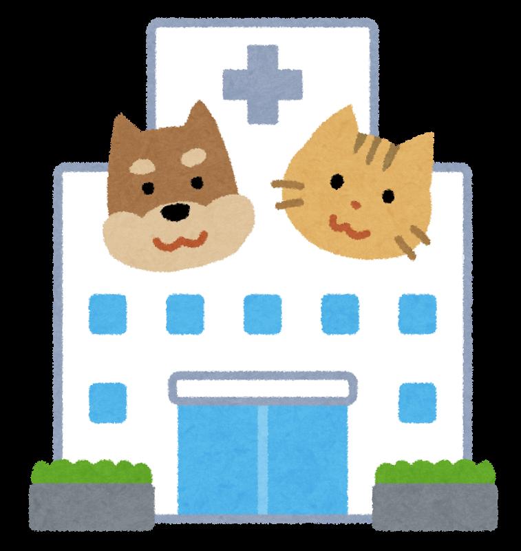 動物看護師って、毎日どんな1日を過ごしているの?