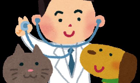猫の混合ワクチンしてますか?予防できる病気って?