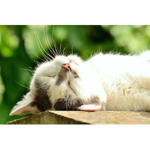 急な猫の飛びつき癖を直したい!成功するしつけ3つのコツ