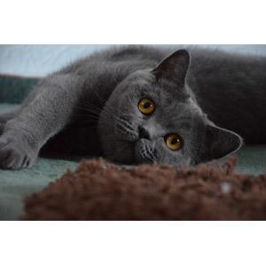 知らないとダメ!一人暮らしで猫を飼う人がしつけるべき3つのこと
