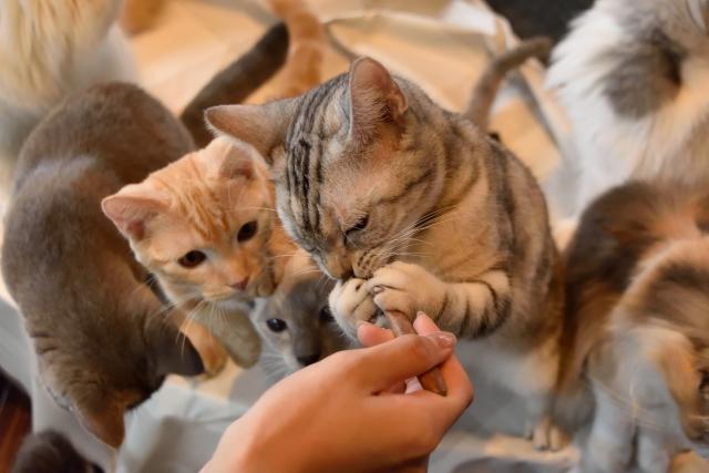 メインクーンの子猫に適した餌の量は?
