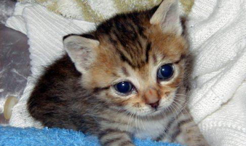 殴るのはだめ!猫のしつけは〇〇が一番重要!