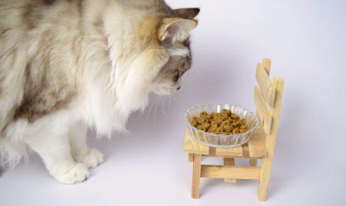 猫の餌って何があるの?食べていいものダメなものを徹底解説!