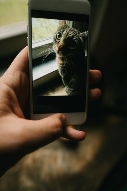 猫のしつけに役立つアプリを紹介!