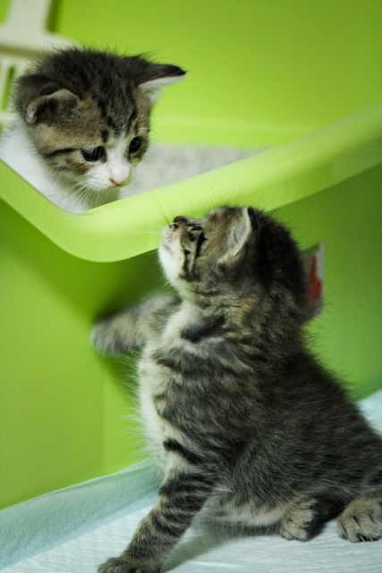 猫のしつけに困った!東京でおすすめの猫のしつけ教室とは?
