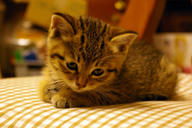 猫のしつけで、閉じ込めるのはぜったいだめ!飼い主がしつけでやってはいけない行動とは!?