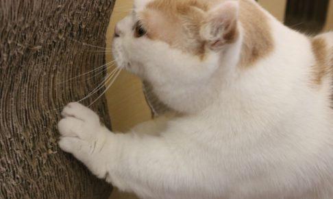 猫が爪を出さないようにするしつけ方法とは?