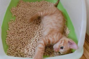 猫のトイレのしつけをはじめる時期っていつがいい??