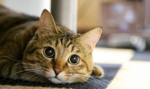 猫のしつけに困った!大阪でおすすめの猫のしつけ教室とは?