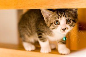 子猫の餌って何を与えればいいの?子猫の餌に関する情報まとめ