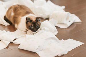 猫が布団で粗相をしてしまうときのしつけ方法を紹介!