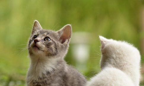 キャットフードの主流はカリカリ?猫の餌に関する不安を解消!