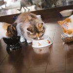 安心・安全で飼い猫もうれしいキャットフードをご紹介!